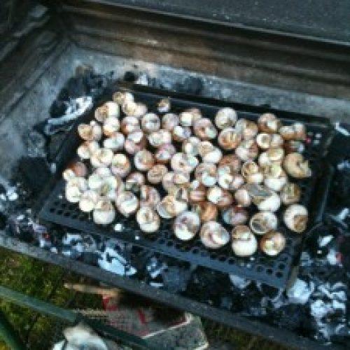 2012 - P'tits Gris au BBQ